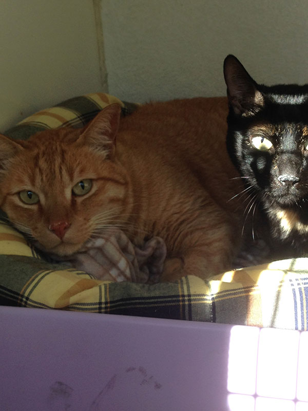 Peewee and Belinha — a very chilled out pair