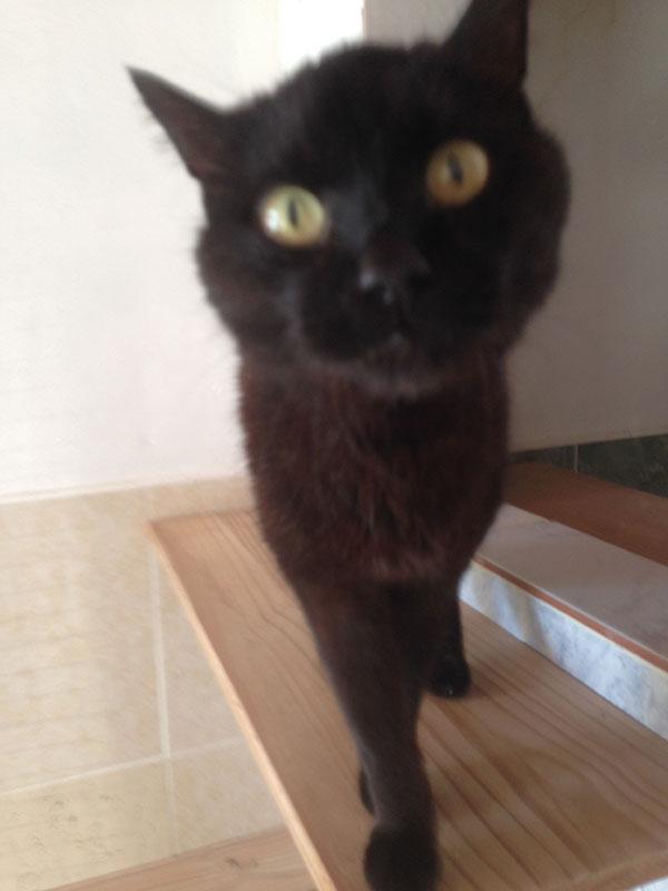 Inquisitive Blackie