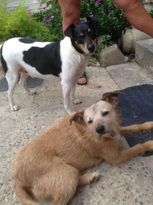 Jackie's lovely dogs Coco and Derecha