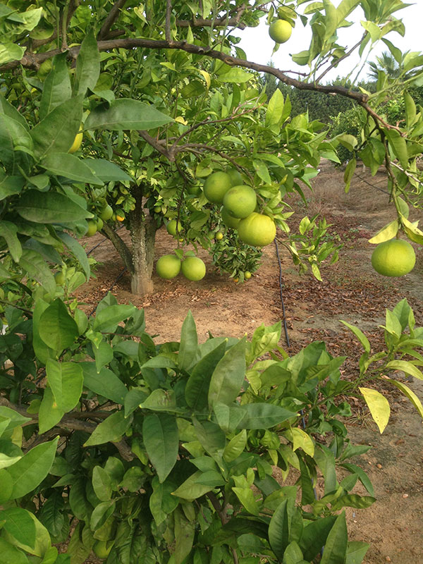 …and heavily laden fruit trees