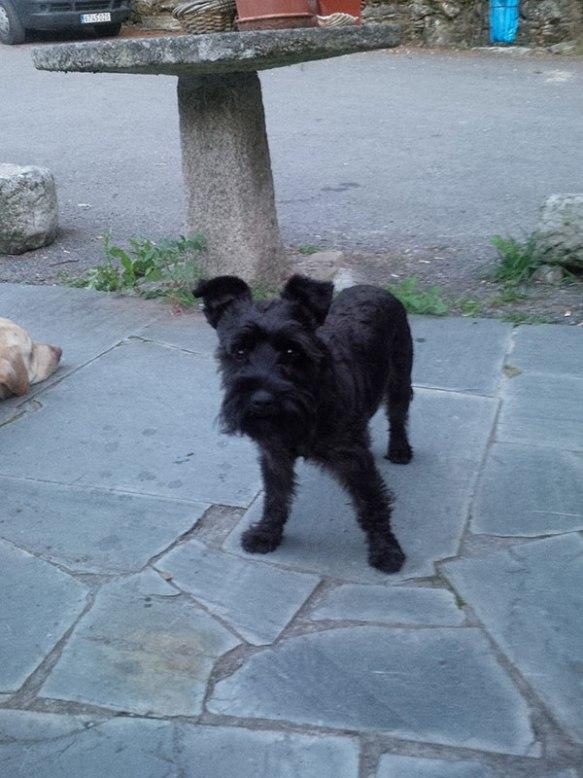 Resident 'boss dog' Elliott