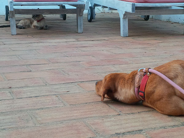 Rudi was beside herself, desperate to get a sniff of the cat, who couldn't have been less interested