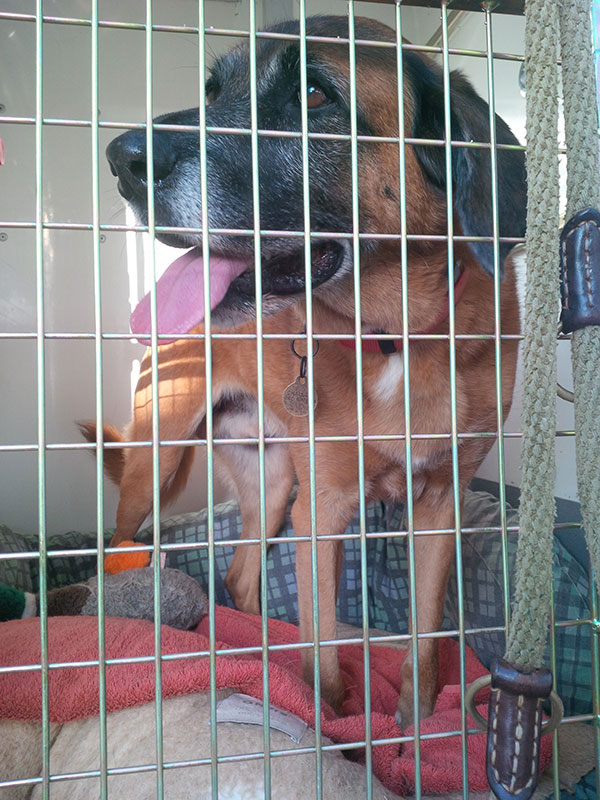 Rusty is ready for the off, with a lovely soft bed in his compartment to rest his old bones on