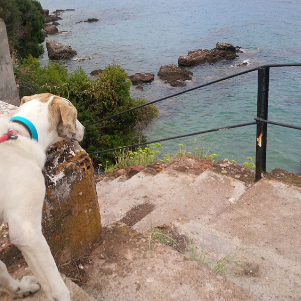 Sebastian takes a shy look at the sea from a safe distance