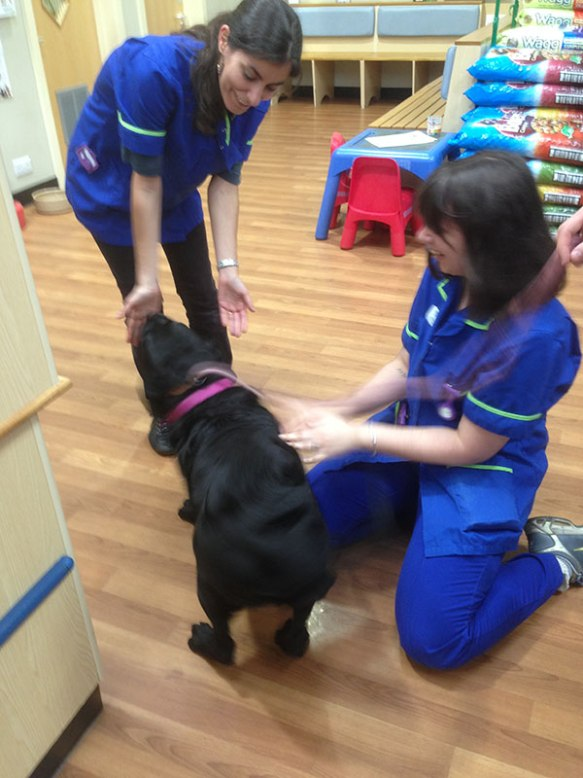 Rufus reunited with Ana — a great reason to visit the vet