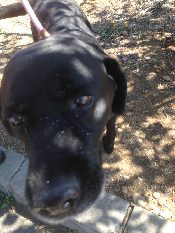 Rufus, who has been on his best behaviour
