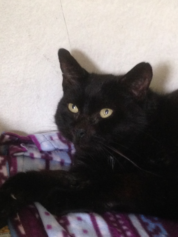 Sam is a gregarious fellow with a wonderful purr, who loves to be lightly stroked along his back