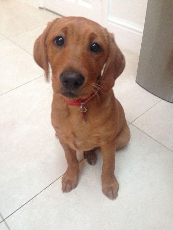 Irresistible pup Callie