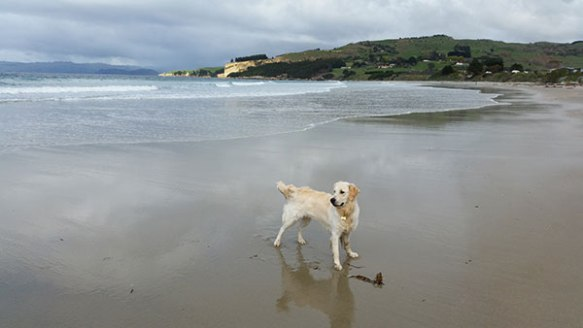 …and exploring his new beach