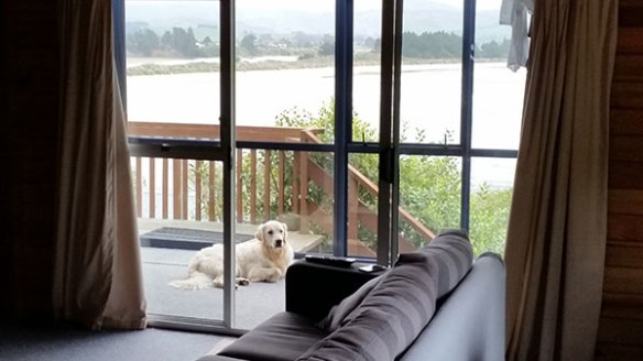 Moss relaxing at his New Zealand home…