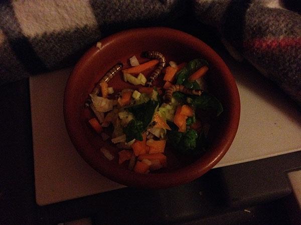 Dexter's nosh — chopped veg and live worms!