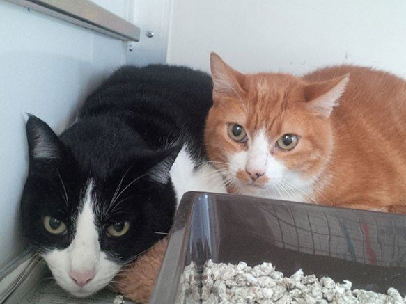 Tereco and Felix, two of the family of four cats who are heading back to the Portuguese Algarve