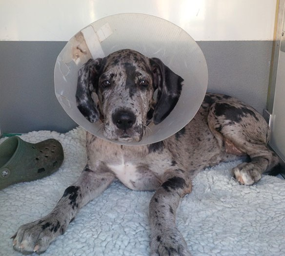 Fina is wearing a cone because she has a cut on her elbow which has been treated and stitched.