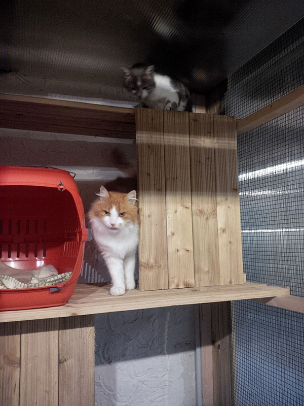 Coco and Pepe at the cattery