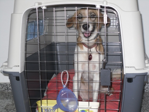 Lucy in her crate ready for take-off
