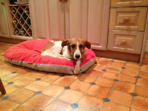 Lucy in her snazzy red bed