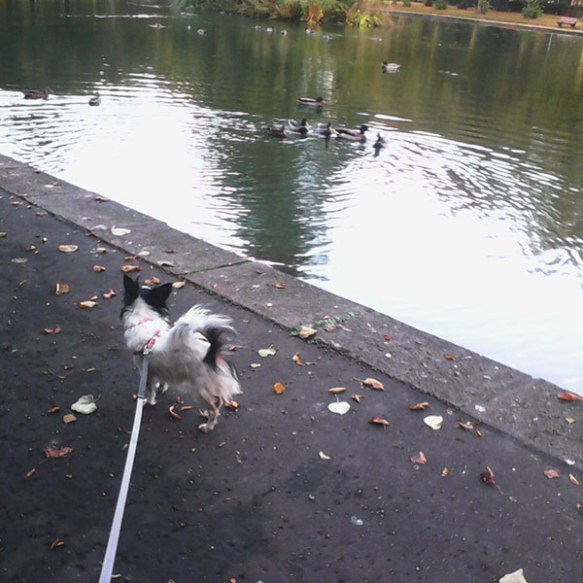 …and keeping a close eye on the ducks while out on an Autumnal walk