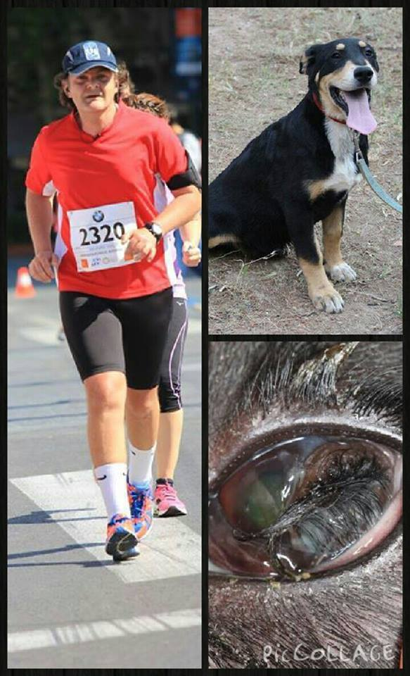Alexandros (L) is running the Athens marathon this weekend to help raise money for the shelter and in particular for Danae's operation. You can see what a pretty dog Danae is, top right, and bottom right, her poor eye.