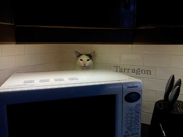 Barley behind the microwave, where he took refuge on arriving in the UK. He has since settled very happily in to his new life.