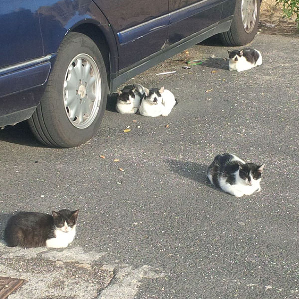 A few of the local residents — there looks to be a family connection