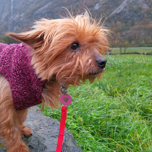Izy is so tiny we had to pop her on a rock to look at the mountains as the lush green grass was a bit too tall for her. She wasn't too keen on the rain, either, despite her little woolly jumper!