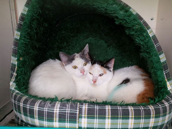 The two pretty youngsters who've been adopted by Catherine