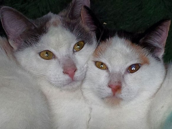 Pearl and Ruby are a very bonded pair