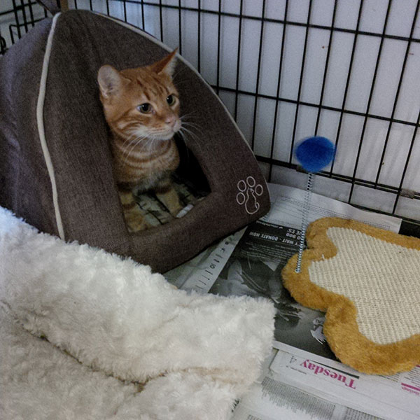 Milo settles in to his temporary accommodation, looking quite satisfied with the furnishings he brought with him from Malta. He'll soon start the last leg of his journey to Ireland.