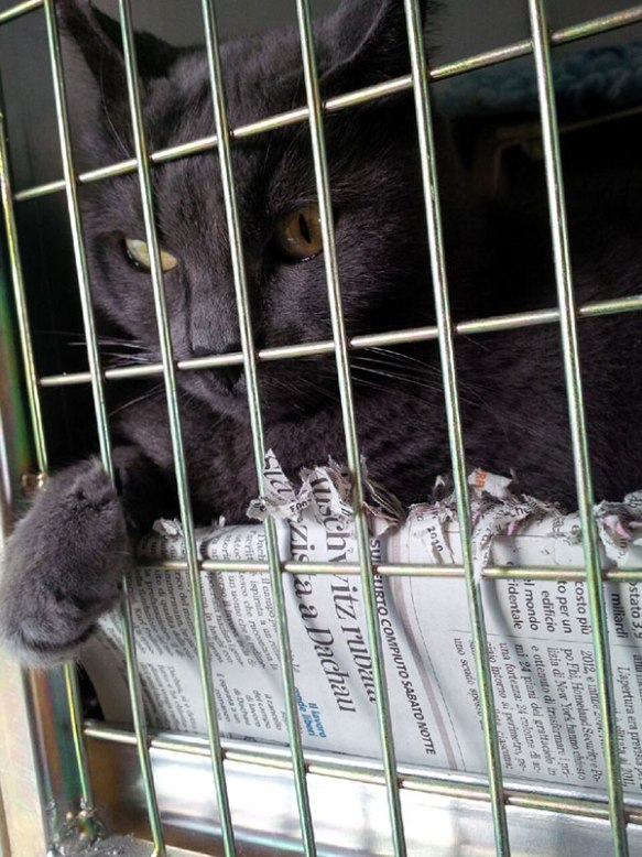 Cleo is a very cool cat who loves to scritch up the newspaper