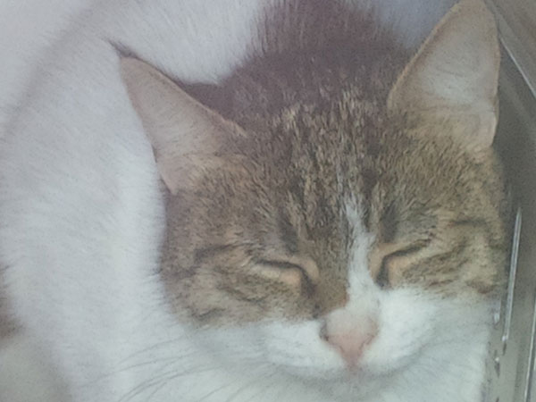 Pricilla is a bit shyer, but very sweet and likes a little tickle