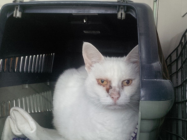 Lara is very gentle and easygoing, ready to eat, drink, chat or sleep, whatever's next. She has a blocked tear duct and her owner, Olga, will be taking her to the vet as soon as she arrives home