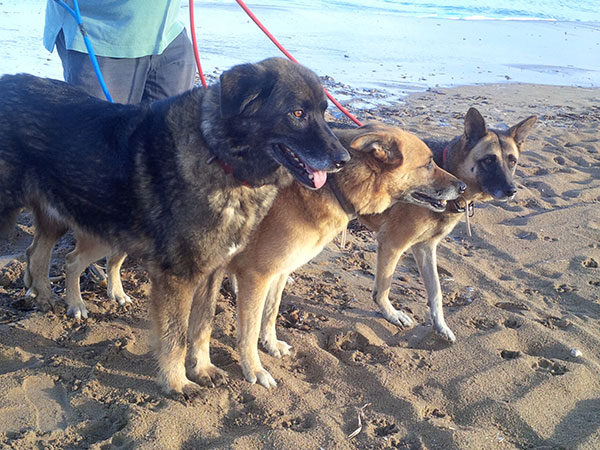 Jake, Shakira and Hendrix on Denia beach