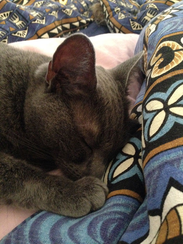 Just 15 minutes later Ophelia was tucked up in bed having a nap!