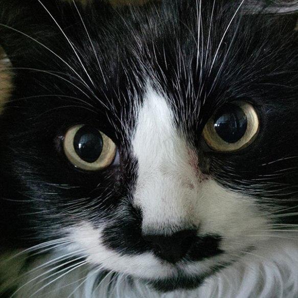 The camera loves Fifi!