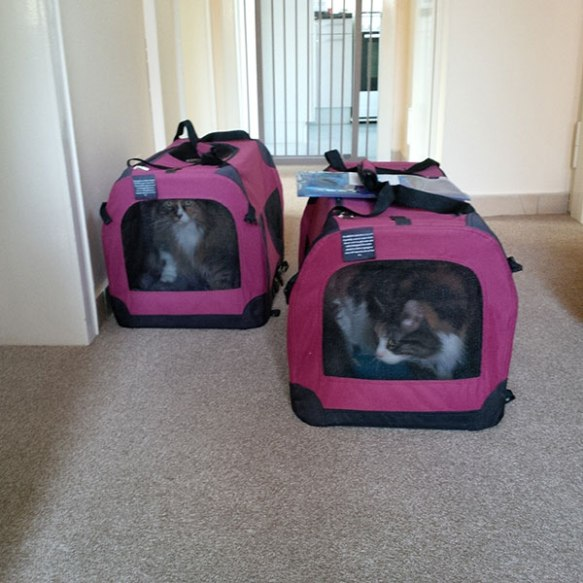 Safe arrival for the fabulous feline duo