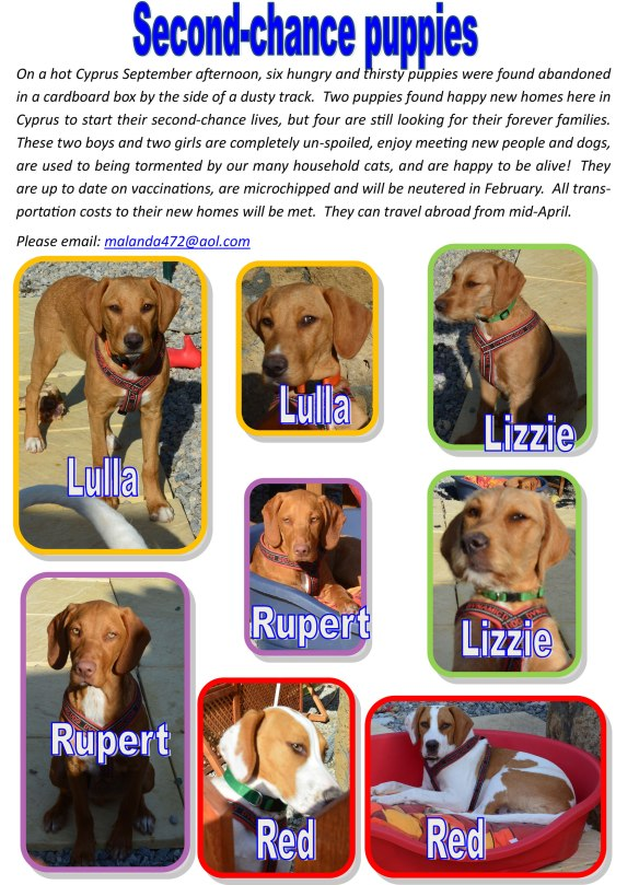 Amanda's poster looking for new homes for the 'second-chance puppies'