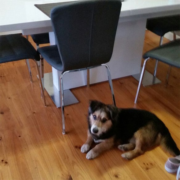Jake already has his paws under the table