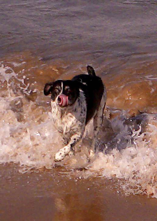 Rigsby loves playing in the sea…