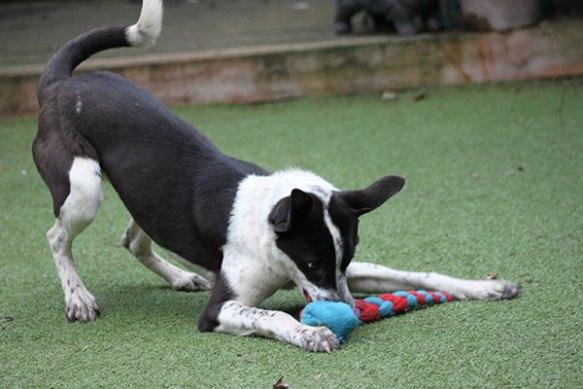 Daisy ready to play