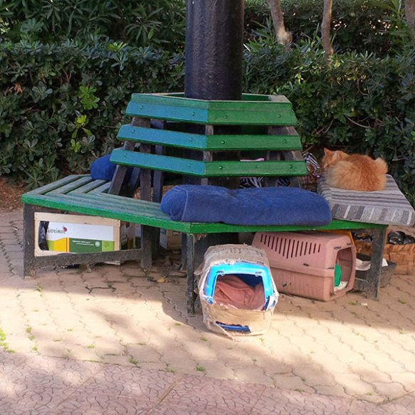 There are various home comforts all around —cat boxes, tents and plenty of bedding to keep them warm in the sometimes biting wind