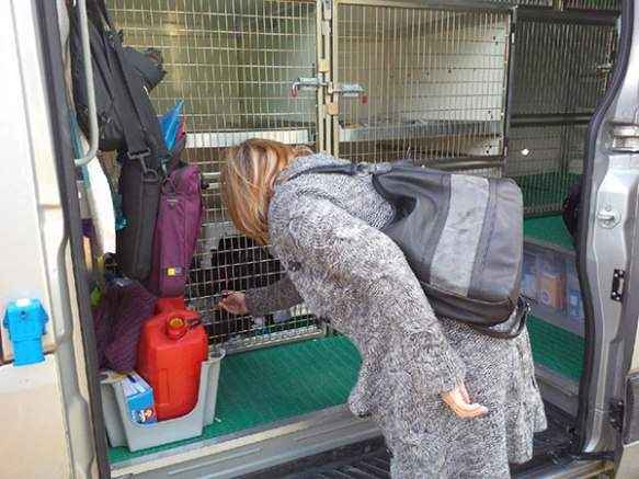Julie saying 'au revoir' to her cats