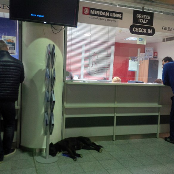 We left Greece from the port of Igoumenitsa, where we were cheered to be reminded of how the street dogs are tolerated — and even looked after — by the port authorities. Everyone had to step around this sleeping hound to get their tickets!