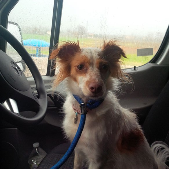 We arrived at the Italian port of Ancona and, when we stopped nearby to walk the dogs, the heavens opened! Milou jumped straight back into the van and into the driver's seat!
