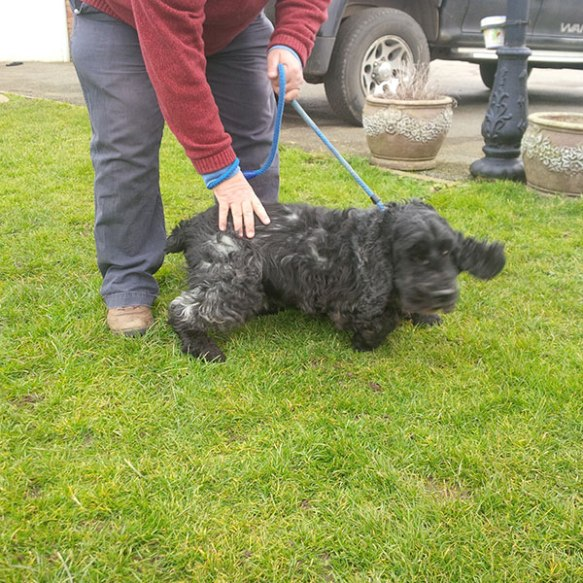 Courier M showing off his dog-handling skills with Charlie. But Charlie has ideas of his own…