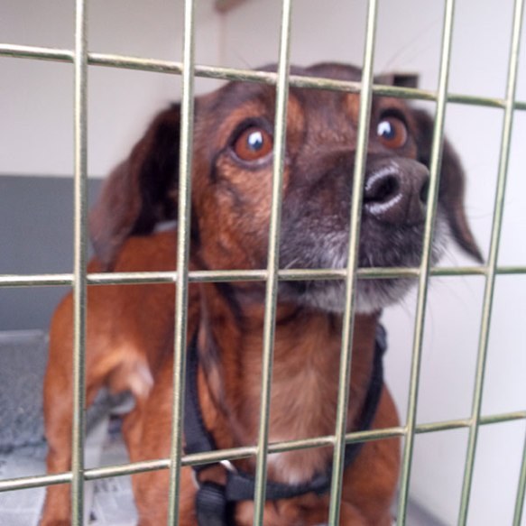 We're looking forward to walking Borat, who seems like a lively, friendly chap