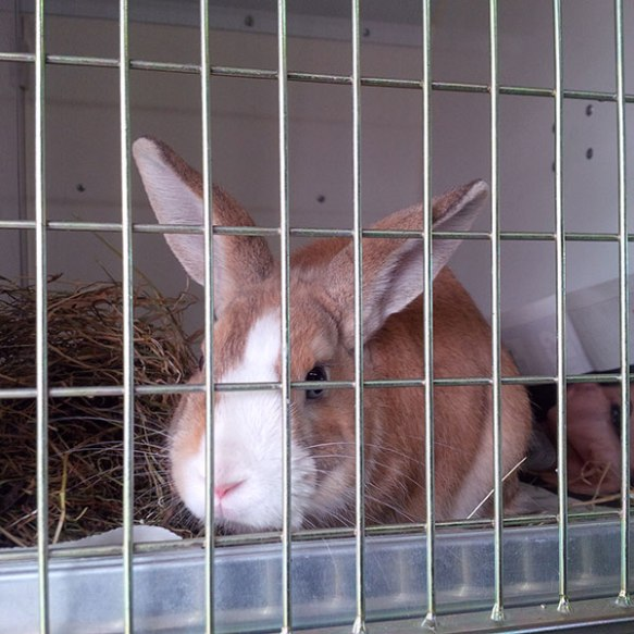 Cigrunet is a very chilled-out bunny