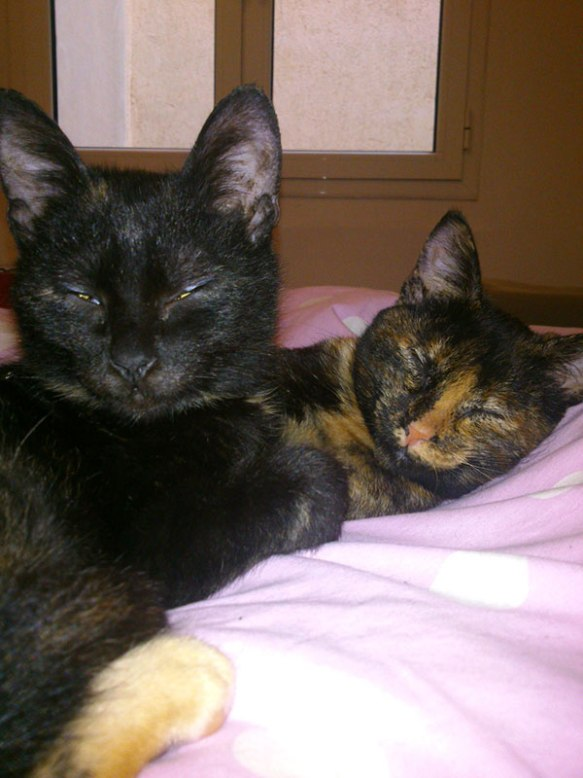 Cordelia shared this lovely photo of Poppi (L) and Philomena (R) relaxing at Anya and Alesa's home