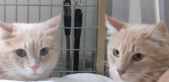 Creamy ginger brothers Ruben (L) and Hugo (R)