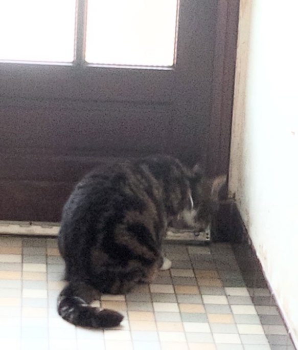 Mittens on arrival at their new home in Normandy, taking a close look at the front door