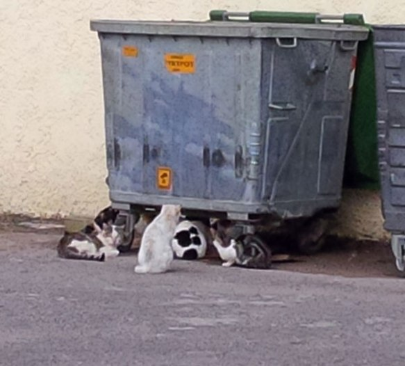 We are very aware of the difficult lives led by stray cats around dustbins. As we left Stoupa we spotted a group of 12 or more round this bin. Even though we approached very slowly, most of them scuttled away over the wall, leaving just a handful on guard. Who were rewarded with some cat treats.